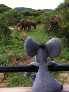 Elephants - apparently, elephants and mice are related??  Perhaps it's the big ears......