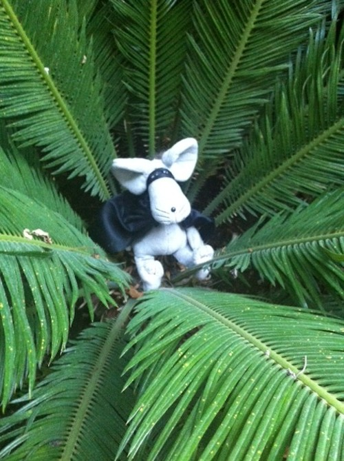 She appeared one morning in the garden……apparently trying to hide in the centre of an old fern…..